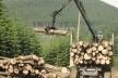 У Львові громада вимагає звільнити керівника військового лісокомбінату