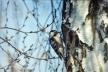 На Львівщині усіх небайдужих просять підгодовувати перелітних птахів