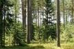 У лісі на Львівщині виявили тіло оголеного чоловіка