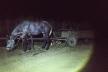 На Львівщині шукають притулок для коня, якого злодії залишили на місці злочину (Фото)