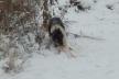 На Львівщині натрапили на звалище решток тварин