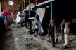На Львівщині відкрили ще одну сімейну ферму