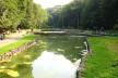 У водоймах Скнилівського парку Львова, виявили високий вміст забруднюючих речовин