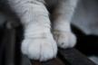 Скажений кіт пошматував родину львів'ян