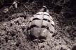 На Янівському цвинтарі гробокопачі знайшли гранату
