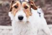 У Львові розпочинається акційна стерилізація собак
