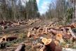 За незаконну порубку лісу на Сокальщині судитимуть місцевого мешканця