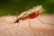 У Львові шпиталізували 46-річного чоловіка - малярія