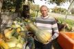 На Львівщині вирощують гібрид кавуна і гарбуза – кавбуз (Фото)