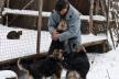 Відомий притулок для тварин Юрія Микитюка під Львовом залишився без продуктів, - волонтер
