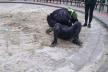 У Львові п'яний чоловік напав на поліцейського