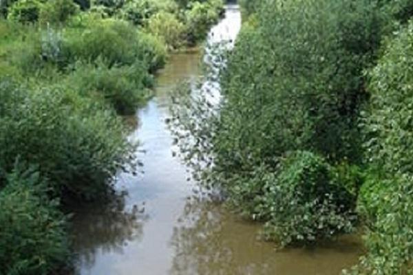Сільський голова Зимної Води вважає, що воду у місцевій річці отруїли львів'яни