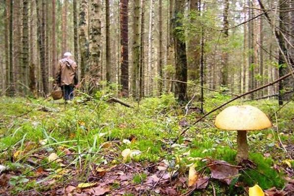 Протягом останнього тижня у лісах Львівщини пропало безвісти троє людей