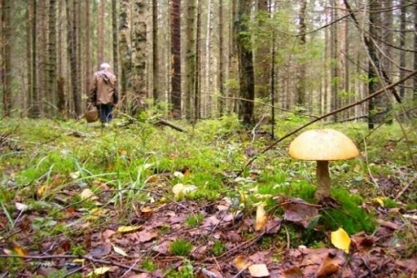 Із симптомами переохолодження знайшли жінку, яка заблукала у лісі