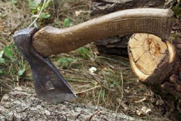 Незаконна вирубка лісів thumbnail