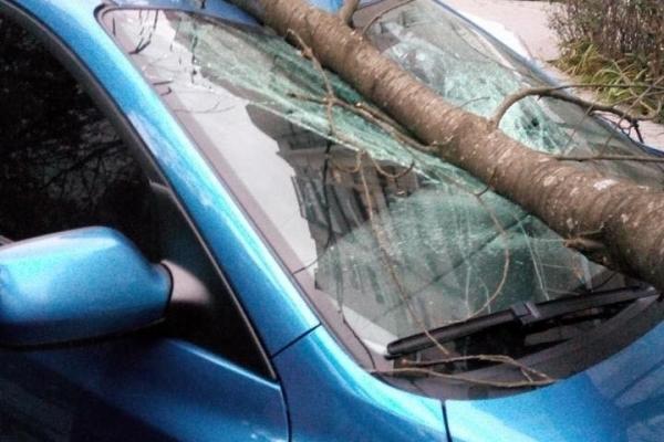 Повалені дерева, побиті автомобілі, пошкоджені дахи будинків: фото наслідків нічної негоди у Львові та Львівській області