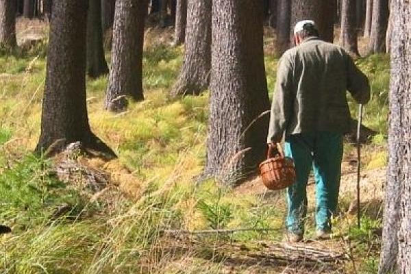 71-річний стриянин заблукав у лісі під час збирання грибів