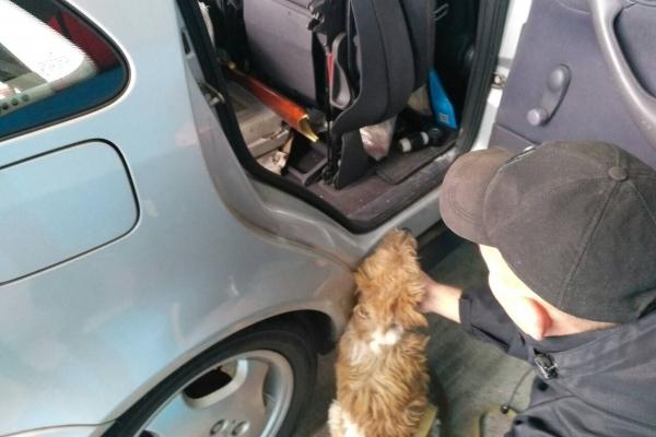 Гвинтівку під набій Флобера знайшов службовий пес на «Раві-Руській»