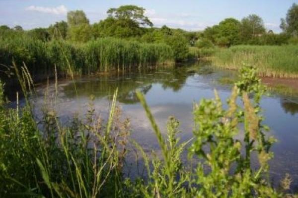 На Львівщині віддадуть в оренду більше 170 ставків