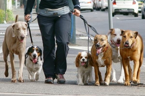 У Львові безкоштовно вчитимуть правильно поводитися із собаками