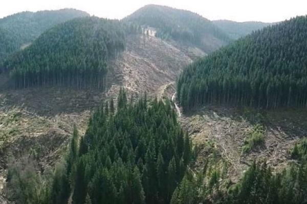 На Львівщині незаконно вирубали 94 кубометри лісу: обіцяють покарати лісника