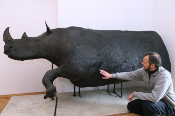 У Львові реставрували опудало волохатого носорога, якому понад 14 тисяч років (Фото)