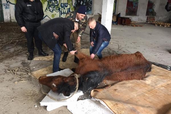 У Львові кінь, над яким знущався господар, сьогодні помер