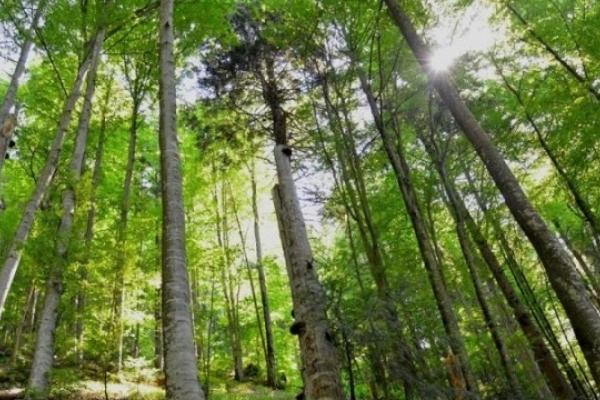 На Львівщині створили новий ландшафтний заказник