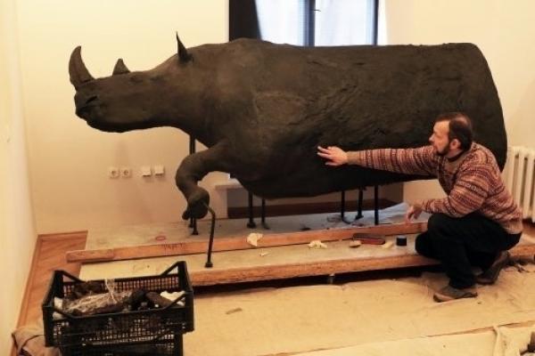 В Львівському музеї з'явився волохатий носоріг, якому 10 тисяч років