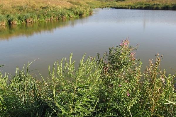 Львівські водойми очищатимуть від малярійних комарів (перелік)