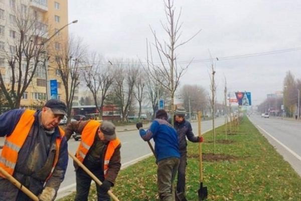 У Львові висадять 130 тисяч однорічних рослин