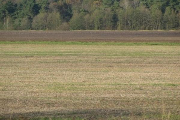 Голова однієї з сільрад на Львівщині безоплатно передав земельну ділянку приватній особі