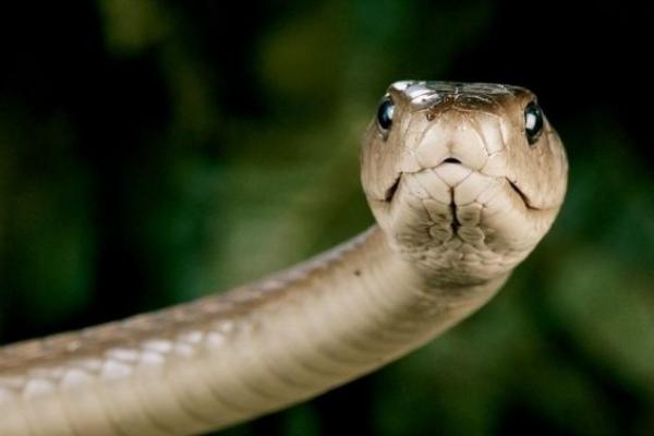 У Сколівському районі 32-річний чоловік потрапив до реанімації через укус змії