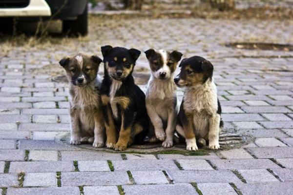 У Львові на третину скоротили чисельність безпритульних собак