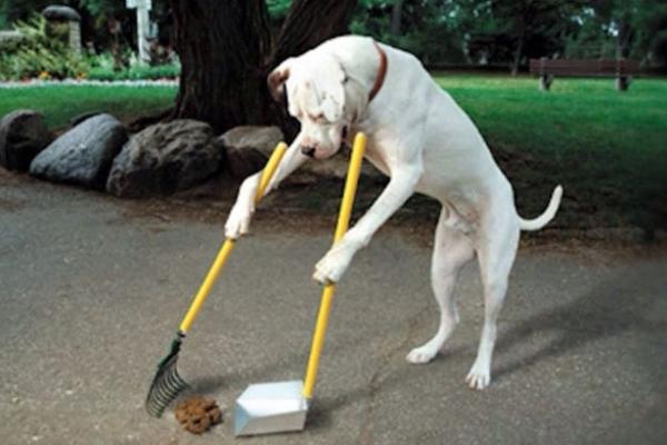 У Львові власників собак зобов'язали прибирати за своїми улюбленцями