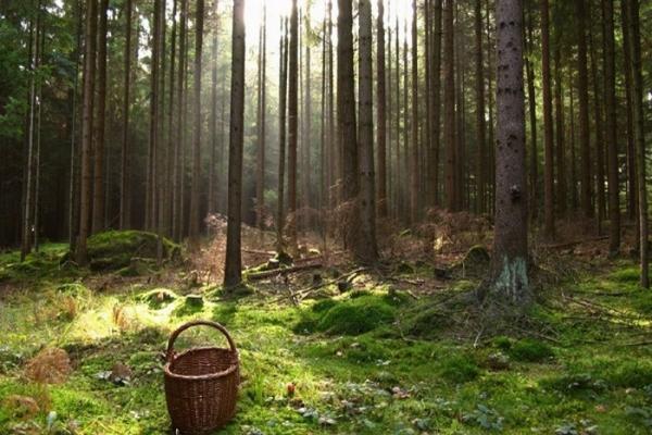 У карпатських лісах на Львівщині заблукали дві дівчинки