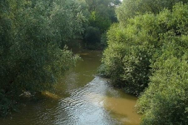 В річку Стрв'яж несе шкідливі речовини її притока з Самбірського району
