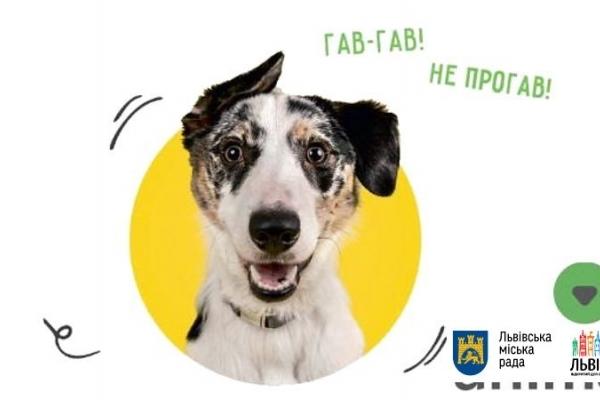 У Львові на вулицях чіпуватимуть собак (адреси)