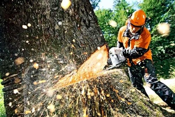 На Львівщині відкрили 101 справу щодо незаконної рубки дерев