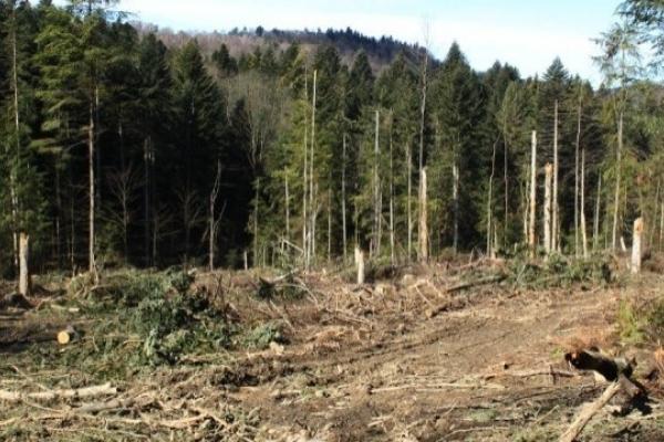 В Україні підвищили штрафи за незаконну вирубку лісу