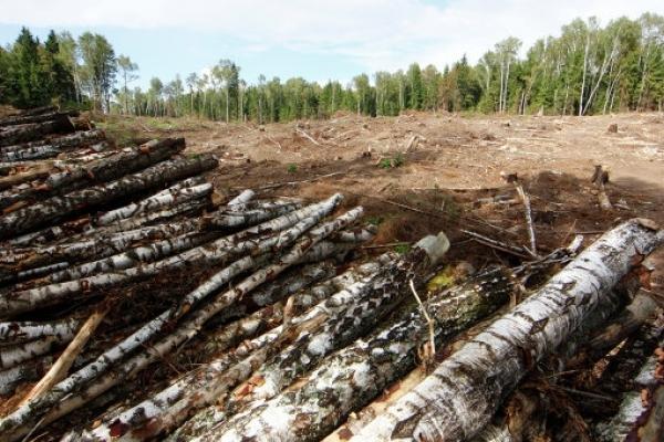 На Львівщині  судили трьох чоловіків, які незаконно вирубували дерева на території природно-заповідного фонду