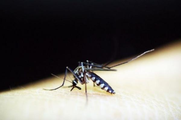 У Львові бізнесмен помер від тропічної малярії (Відео)