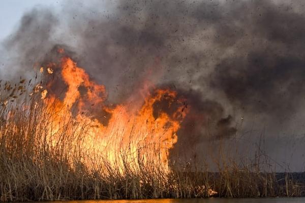 На Львівщині масово горять поля