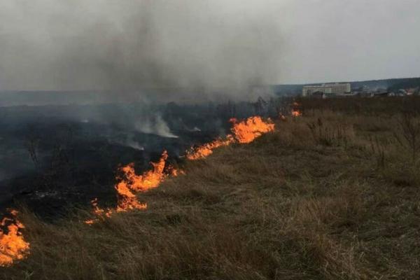 Маленькі герої Львівщини: четверо хлопчиків врятували довкілля від пожежі (Фото)