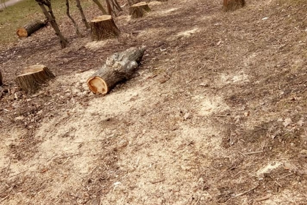 У Львові на Стрийській вирубали цілу алею дерев