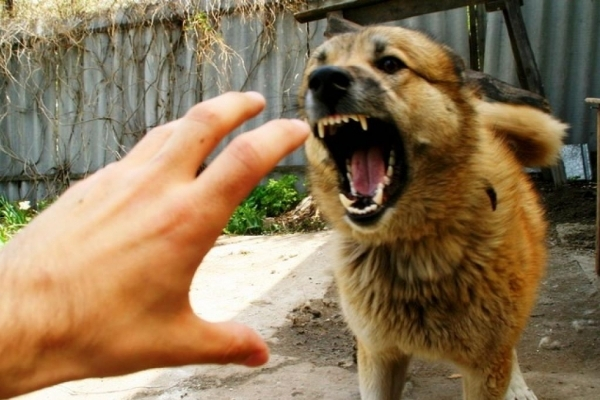 Карантин на Львівщині: виявили хворого на сказ собаку