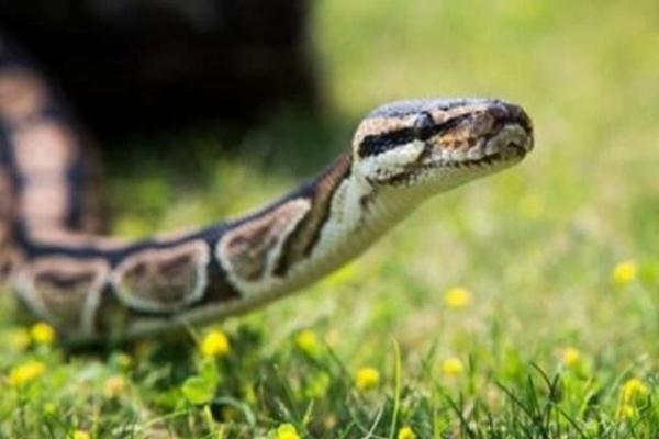 На Львівщині селянин постраждав від укусу змії
