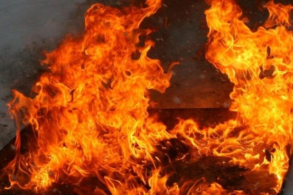 На Жидачівщині під час пожежі на свинофермі загинуло 500 тварин (Відео)