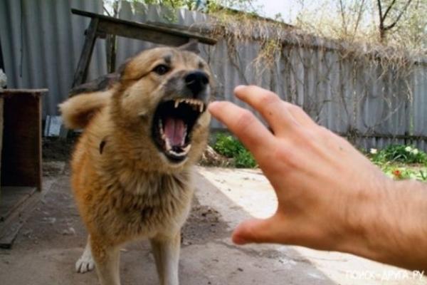 Собака накинувся у Львові на старшого сержанта поліції