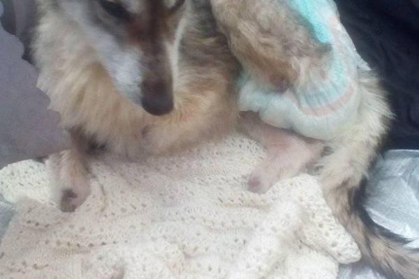 На Львівщині нелюди відрубали собаці лапи